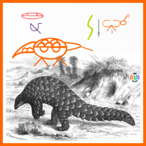 Interdependence (1) – the pangolin …