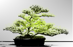 The art of Bonsai